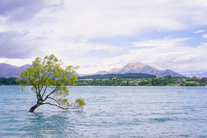 New Zealand_17