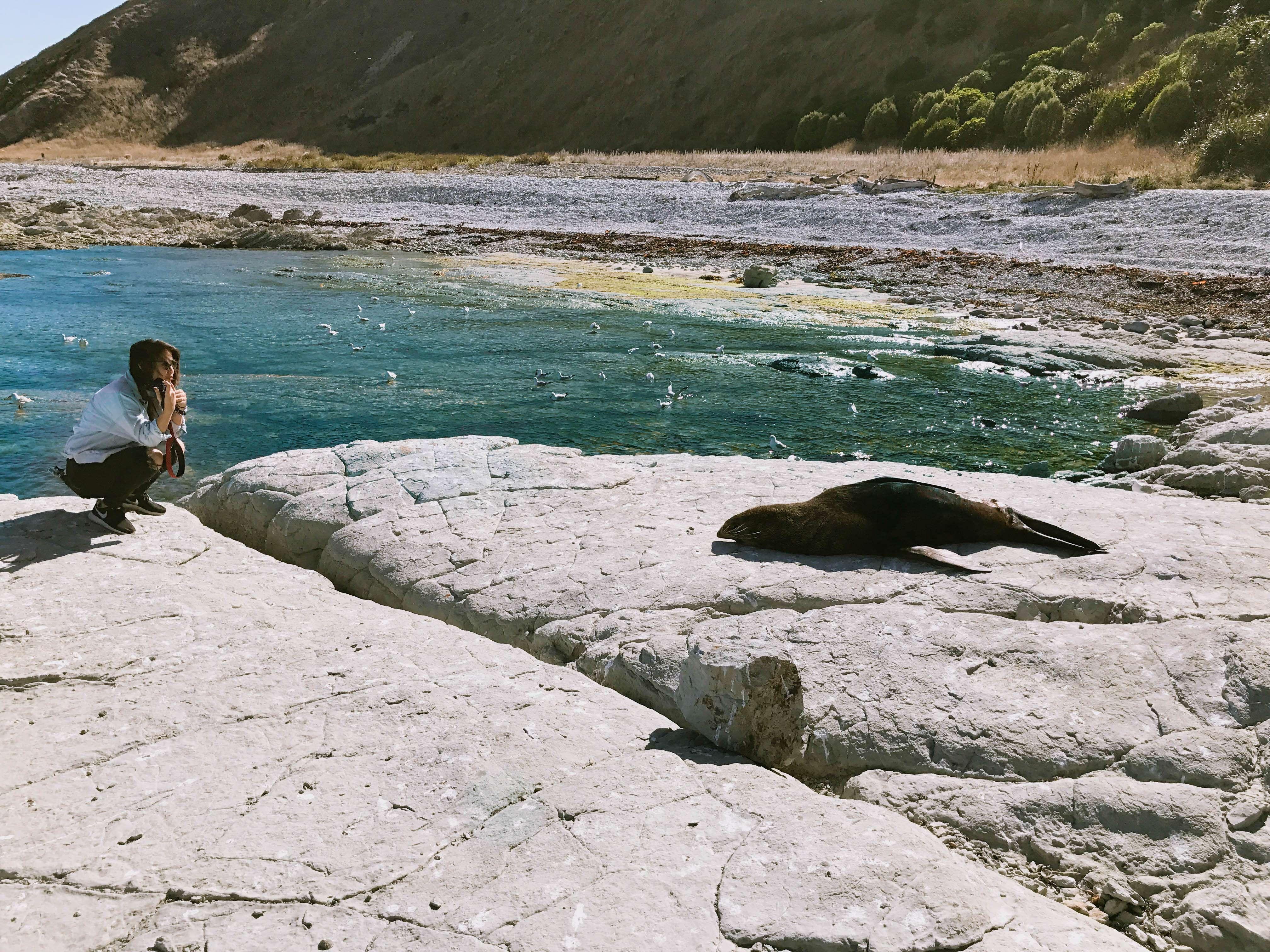 New Zealand_29
