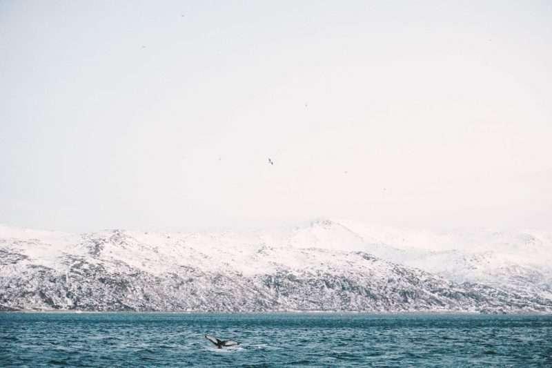 Tromso-10