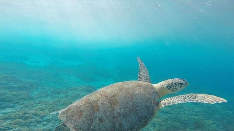 animal-ocean-reptile-135230