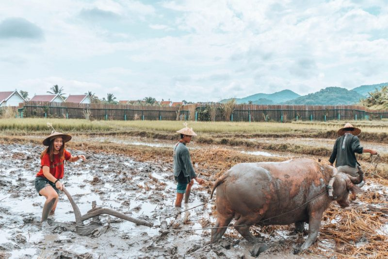 Living Land Rice Farm