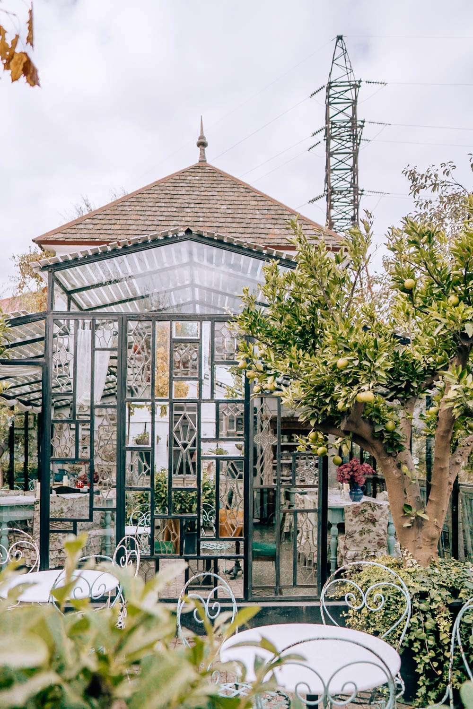 Gardenia Shevarnadze